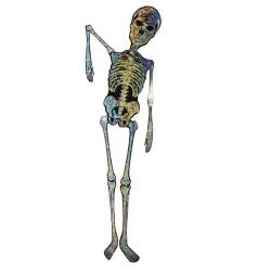 Skelets 146cm